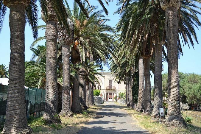 Viale delle Palme